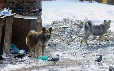 Бродячие собаки, фото itar-tass