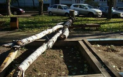 Упавший сухостой в Тольятти, фото с сайта metroport.ru