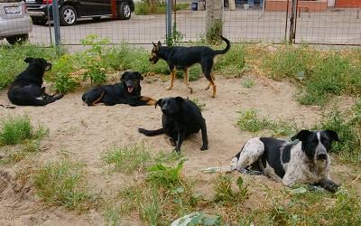 Фото vk.com/sam_si